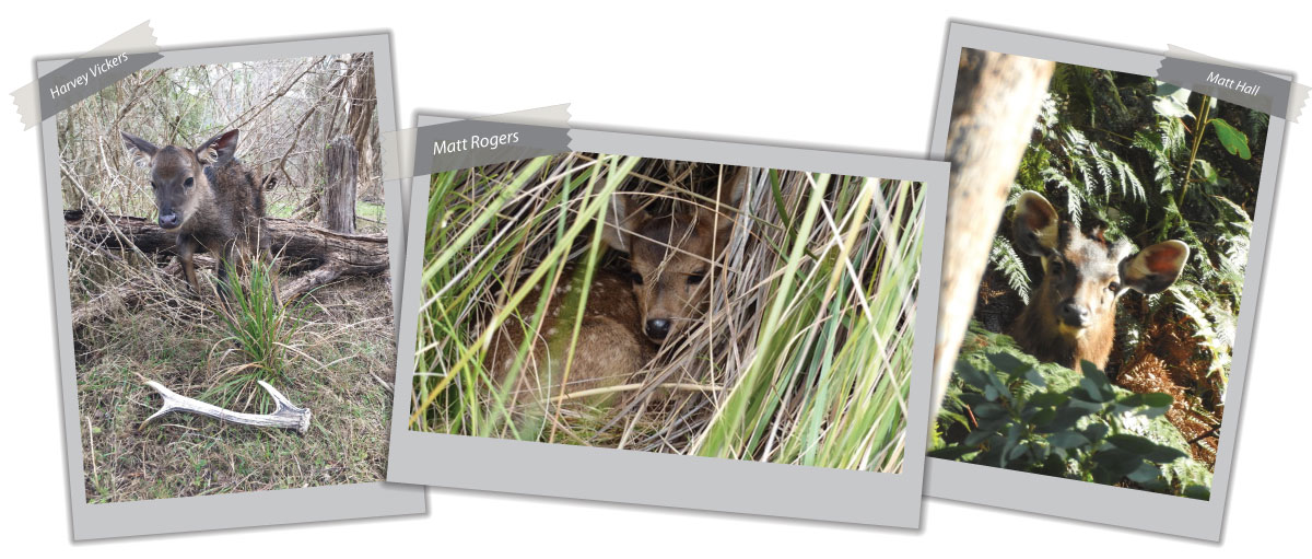 Photo comp samples